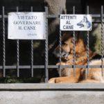 I danni causati dagli animali domestici: quando si è tenuti al risarcimento?