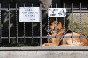 studio legale tutela degli animali
